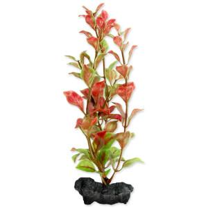 Rostlina TETRA Red Ludwigia S 1ks
