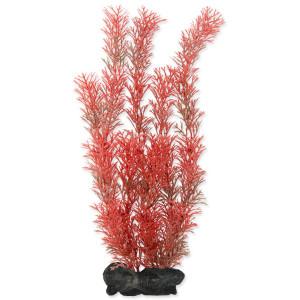 Rostlina TETRA Foxtail Red L 1ks