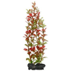 Rostlina TETRA Red Ludwigia L 1ks