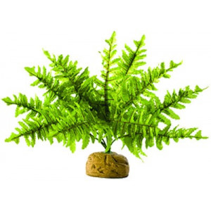 Rostlina EXO TERRA Boston Fern malý 17 cm 1ks