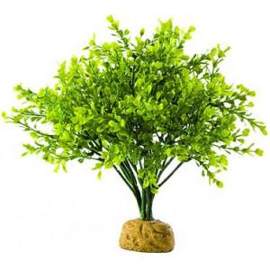 Rostlina EXO TERRA Boxwood bush 27 cm 1ks