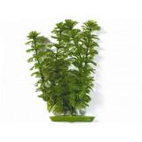 Rostlina MARINA Ambulia 20 cm 1ks