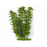 Rostlina MARINA Ambulia 20 cm