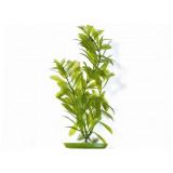 Rostlina MARINA Hygrophila 30 cm 1ks