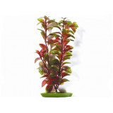 Rostlina LIVING WORLD Red Ludwigia 30 cm 1ks