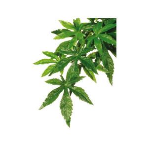 Hagen Exo Terra rostlina Abuliton malá 40 cm
