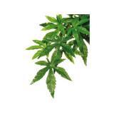 Rostlina EXO TERRA Abuliton střední 55 cm