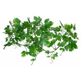 Lucky Reptile Jungle Vine Gape Leaf Vine cca 200 cm