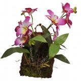 Lucky Reptile Jungle Plants kvetoucí Závěsná orchidej - purpurová cca 20x30 cm
