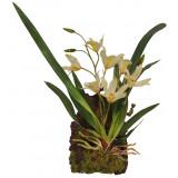 Lucky Reptile Jungle Plants kvetoucí Závěsná orchidej - bílá cca 20x30 cm
