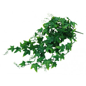 Lucky Reptile Ivy Bush cca 50 cm
