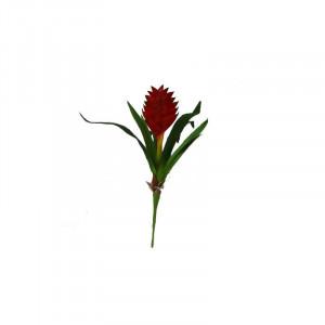 Lucky Reptile Tillandsia cyanea červená, cca 20 cm