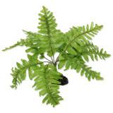 Rostlina REPTI PLANET kapradí Nephrolepis 20 cm 1ks