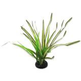 Rostlina REPTI PLANET travina Spartina 30 cm 1ks
