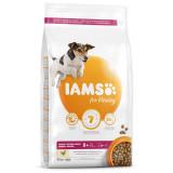 IAMS Dog Senior Small & Medium Chicken