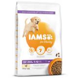 IAMS Dog Puppy Large Chicken 12kg